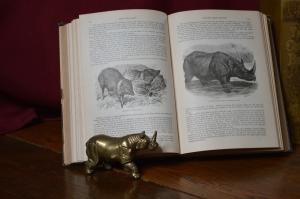 Natural History Rhino